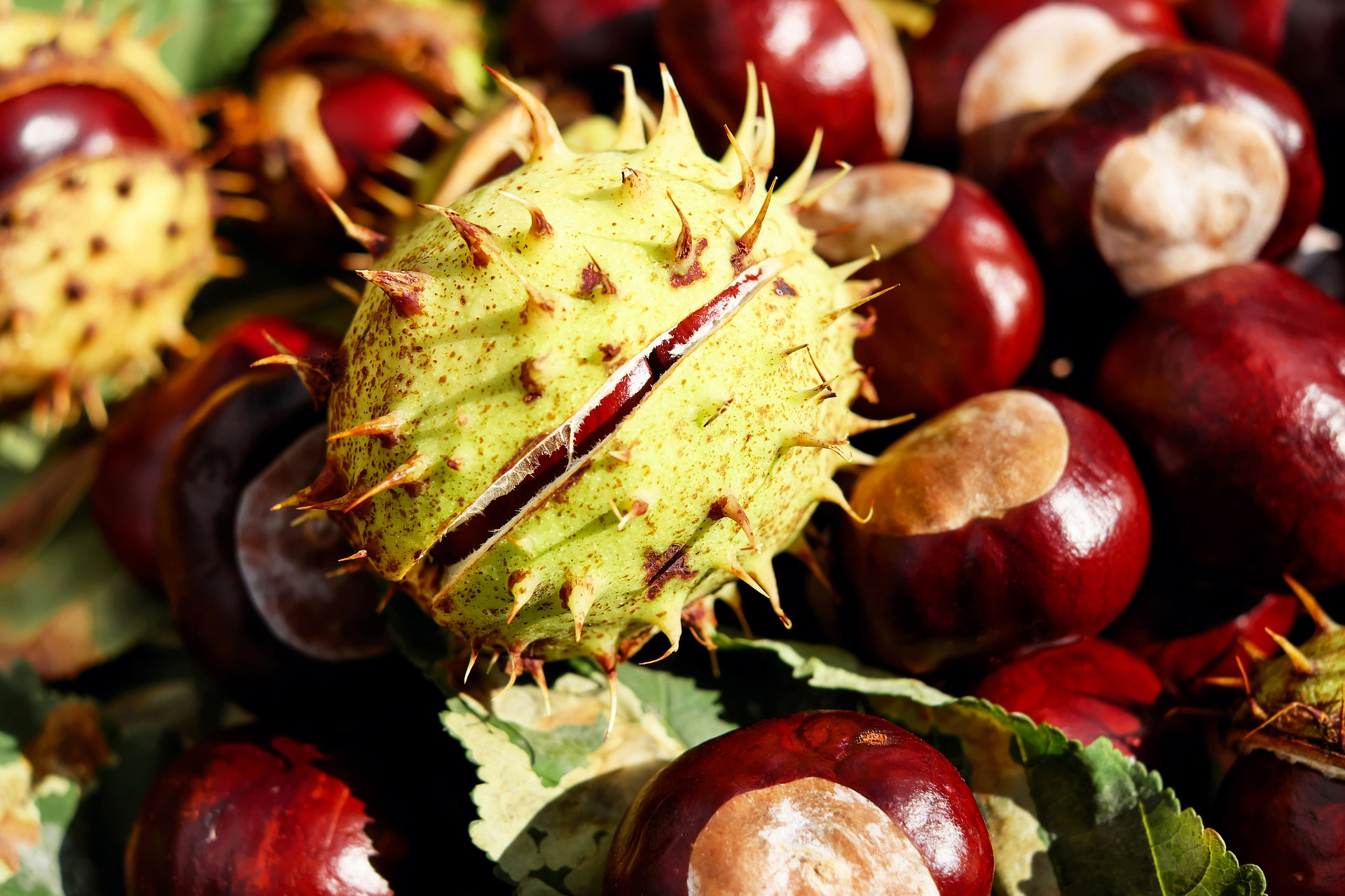 chestnuts agricamping